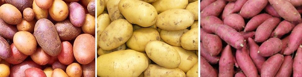 potato exporter bangladesh